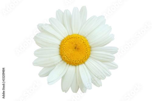 Photo daisy