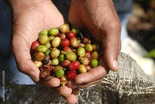 Deurstickers koffiebar repubblica dominicana.,raccoglitore di caffè