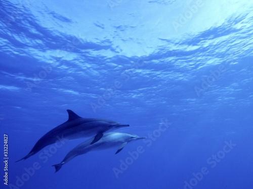 Montage in der Fensternische Delphin big blue dolphin