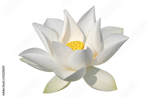 Poster Lotus flower White lotus, isolated, clipping path included