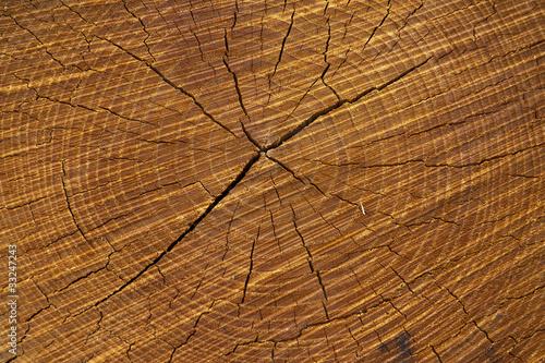 Fotografie, Obraz  wooden cut texture