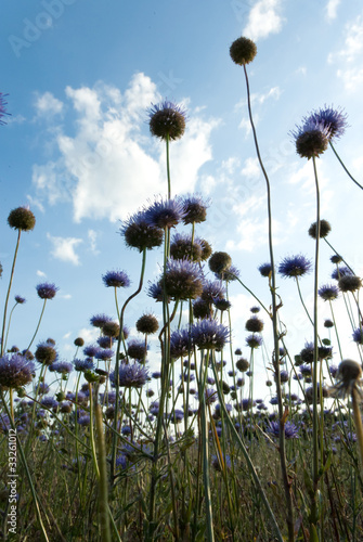 Foto op Canvas Cappuccino flowers