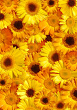 Beautiful Yellow Floral Background