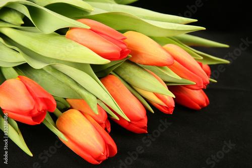 Fototapeta Orange Tulips obraz na płótnie