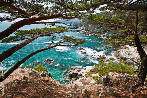 Сoastal cedar rocky shore