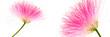 canvas print picture - Rencontre florale