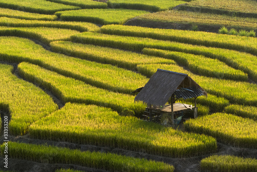Deurstickers Rijstvelden Terraced Rice Field