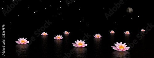 Photo Stands Lotus flower Lily flowers by night