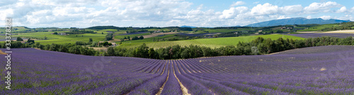 Photo Stands Lavender champ de lavande - Provence