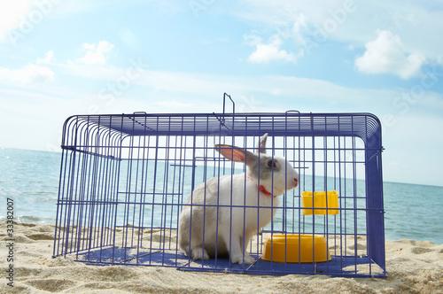 Fotografie, Obraz  rabbit in a metal cage