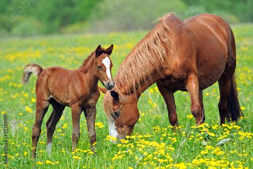 Tuinposter Paarden Horse