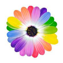 Rainbow Multi Colored Petals O...