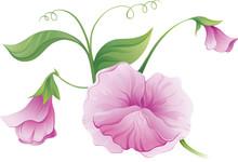 Sweet Pea Flower
