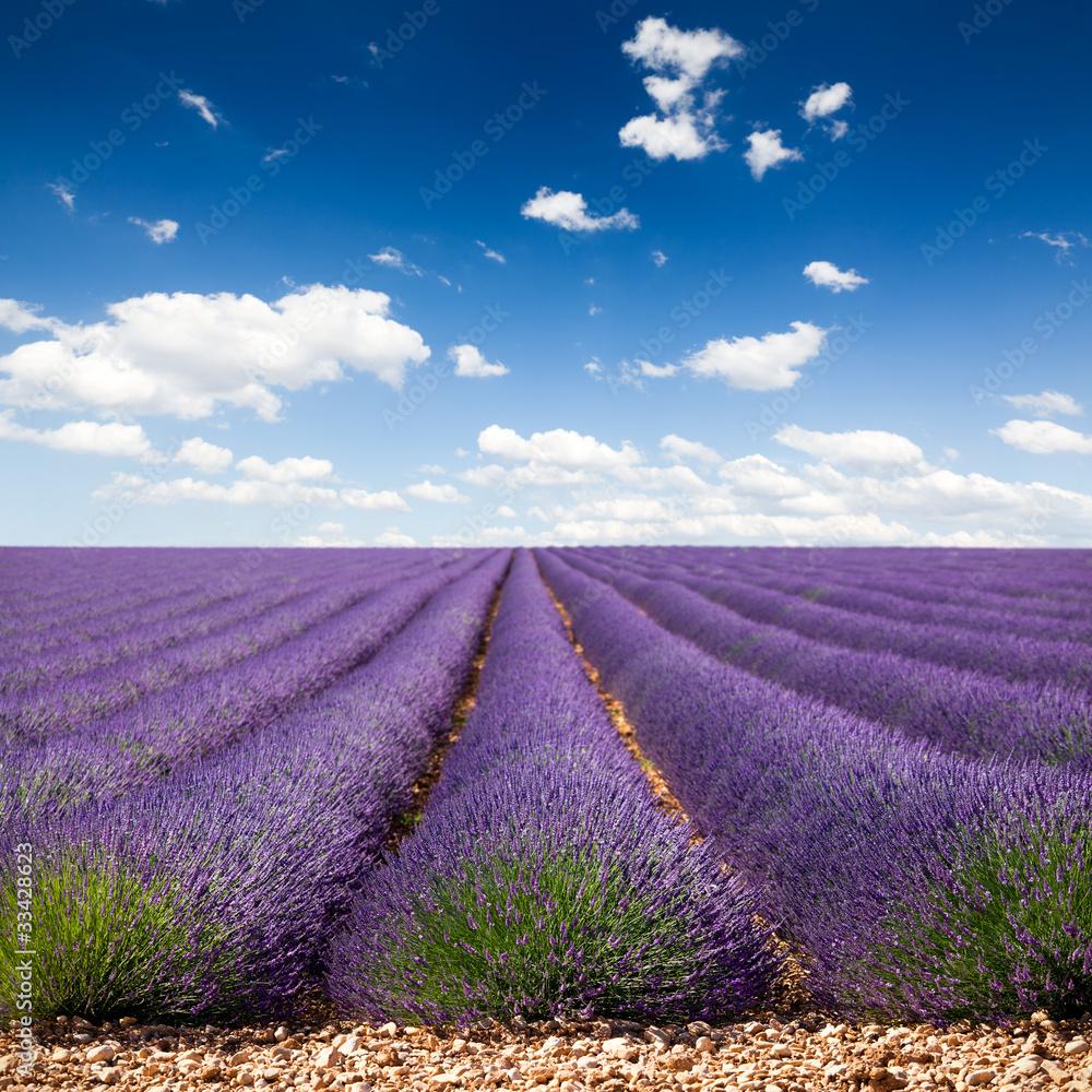 Fototapety, obrazy: Lawendowe pole w Prowansji, chmurki na niebie, Francja