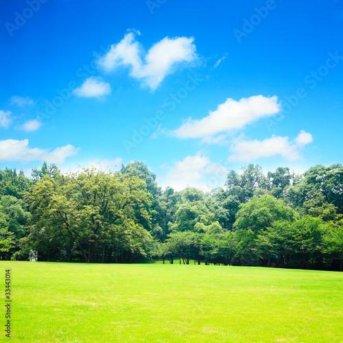 Foto op Plexiglas Weide, Moeras grass field with blue sky