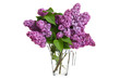 Bouquet of spring purple lilac