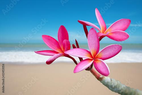 Stickers pour porte Frangipanni Plumeria flowers on the beach