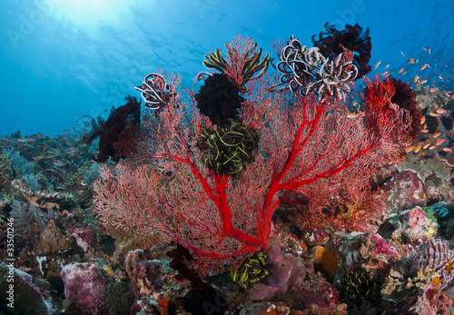Fotografie, Obraz  Beautiful coral
