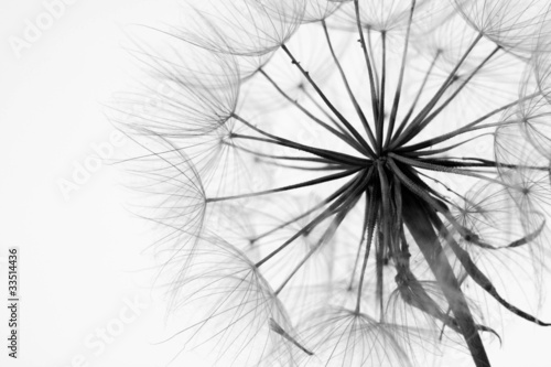 Spoed Foto op Canvas Paardenbloem Close-up of dandelion
