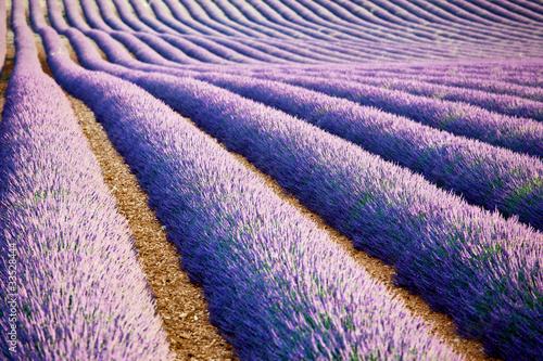 Papiers peints Lilas Lavande Provence France / lavender field in Provence, France