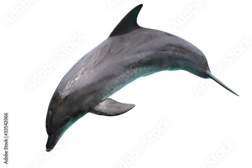 Poster de jardin Dauphins Dolphin isolated on White Background