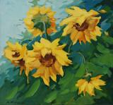 Pole słoneczników malowane na płótnie