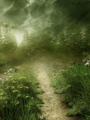 FototapetaLeśna ścieżka we mgle