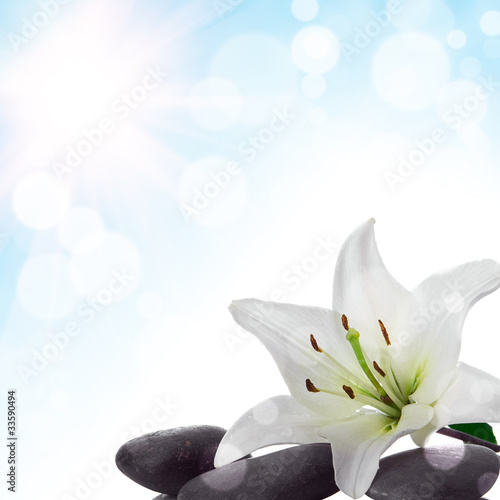 Wall Murals Water lilies background with flower
