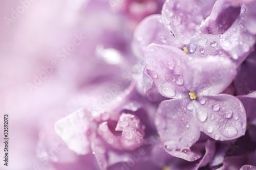 piekne-kwiaty-bzu