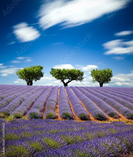 Fototapeta Lawendowe pole w Prowansji, Francja obraz
