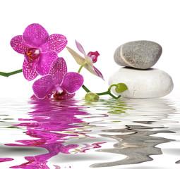 Obraz na Plexi Do Spa Einfach schöne Orchideen