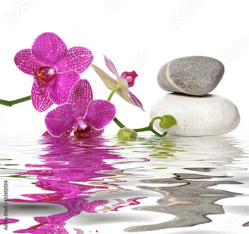 Obraz Po prostu piękne orchidee - fototapety do salonu