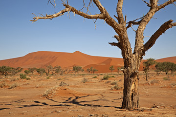 Naklejka Namib-Naukluft-Nationalpark