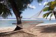 Hammock on a Tropical beach - Rarotonga, Cook Islands