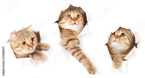 Foto op Aluminium Kat set of one cat in paper side torn hole isolated