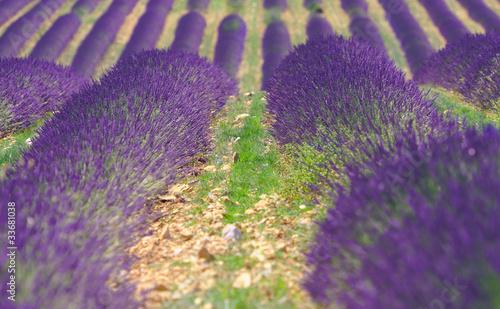 Cadres-photo bureau Violet lavande 4