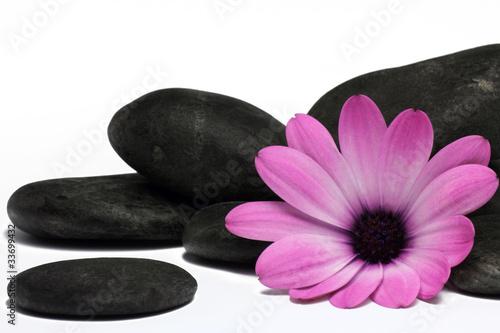 Printed kitchen splashbacks Lotus flower blüte mit steinen