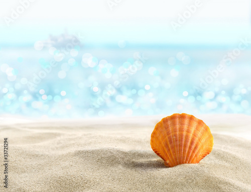 Foto-Kissen - Shell on a sandy beach (von silvae)