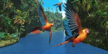 Cuban Red Macaw 2