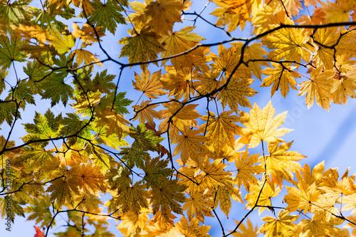 przesledzic-dziwna-jesien