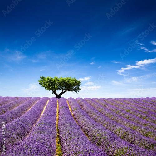 Zdjęcie XXL Provence France Lawenda / pole lawendy w Prowansji, Francja