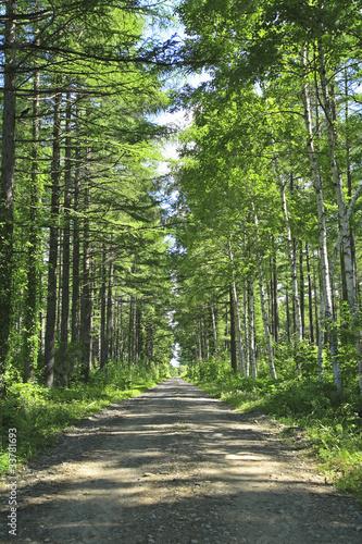 droga-w-lesie-modrzewiowym