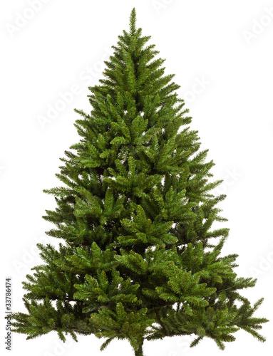 Fototapeta ungeschmückter weihnachtsbaum obraz