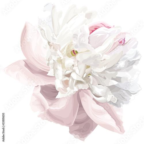 Fotomural White peony flower