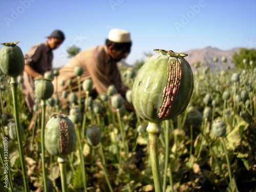 Photo Harvesting Opium, East Afghanistan