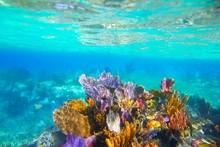Mayan Riviera Reef Snorkel Underwater Coral Paradise