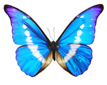 Blue Butterfly (morpho Rhetenor Cacica) Isolated