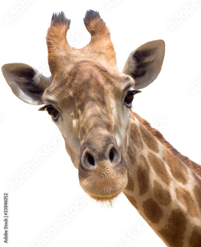 Canvas Prints Giraffe Giraffe closeup