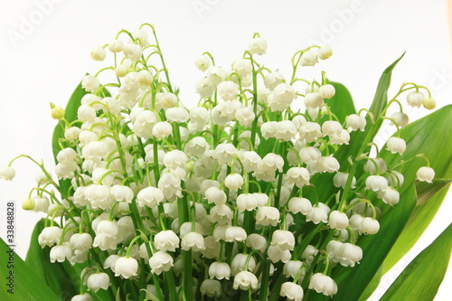 lily-kwiaty