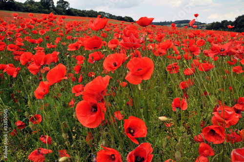 Stickers pour porte Rouge Poppy field